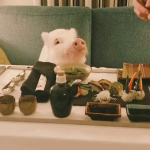 This happy pig eating sushi is enough to brighten anyone's day 🐷🍣: This happy pig eating sushi is enough to brighten anyone's day 🐷🍣