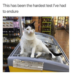 Memes, Test, and Been: This has been the hardest test I've had  to endure  LET DON Touch  THE CAT