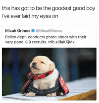 Dank, Doge, and Police: this has got to be the goodest good boy  I've ever laid my eyes on  Micah Grimes@MicahGrimes  Police dept. conducts photo shoot with their  very good K-9 recruits. trib.al/iaK6jMx the goodest boy   — Products shown: Doge Emojis.
