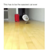 Finally made a video meme page @ifunnymeme.tv go follow it. Thanks: This has to be the sassiest cat ever Finally made a video meme page @ifunnymeme.tv go follow it. Thanks