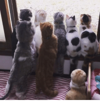 This has to be your favorite cat video :D <3: This has to be your favorite cat video :D <3