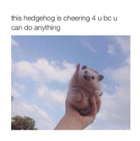 Yay: this hedgehog is cheering 4 u bc u  can do anything Yay