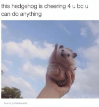 you can do it: this hedgehog is cheering 4 u bc u  can do anything  Source justablueumbr