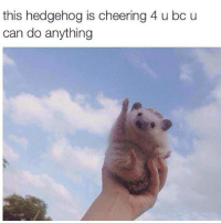 *climbing a ladder to the roof* im gonna fly: this hedgehog is cheering 4 u bc u  can do anything *climbing a ladder to the roof* im gonna fly