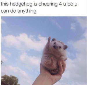 He know you can do it.: this hedgehog is cheering 4 u bc u  can do anything He know you can do it.