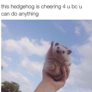 Tumblr, Blog, and Hedgehog: this hedgehog is cheering 4 u bc u  can do anything pixarh:  @ my mutuals!
