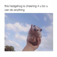 Memes, Music, and Hedgehog: this hedgehog is cheering 4 u bo u  can do anything Hercules you mean hunkules I'd like to make some sweet music