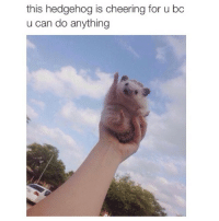 For all of you ❤️: this hedgehog is cheering for u bc  u can do anything For all of you ❤️