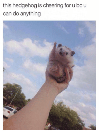 Hedgehog, Humans of Tumblr, and Can: this hedgehog is cheering for u bc u  can do anything