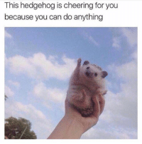 Memes, Hedgehog, and 🤖: This hedgehog is cheering for you  because you can do anything