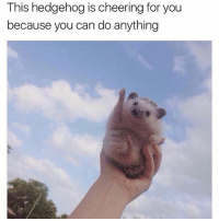 Animals, Cute, and Cute Animals: This hedgehog is cheering for you  because you can do anything SWIPE & TAG ❤️ follow me @v.cute.animals 👈👈 @_theblessedone (THANK U FOR 40K❤️)