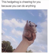 you can do it! (via @_theblessedone ): This hedgehog is cheering for you  because you can do anything you can do it! (via @_theblessedone )