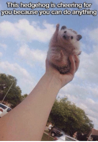 Grumpy Cat, Hedgehog, and Mind: This hedgehog is cheering for  you because you can do anything Yess!! You can do anything you put your mind to!!!