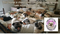 Rusty Pug Retirement Ranch is a love-filled haven for elder, special needs & hospice pugs. Lisa Smith Weber gives all these special needs pugs a wonderful, loving, forever home and she does it all out of the goodness of her heart. She currently has 15 pugs she is caring for. TODAY you can help her!!! 100% of CALENDAR PROFITS go directly to Rusty Pug Retirement Ranch to help with some of the MANY expenses. Get yours now www.grettasgirls.com and support RPRR <3 <3 <3 No pug (and no one) is ever too old to be loved!! Thank you all so much for your generosity! Love and hugs, The P+K family: This home is filled with Kissing, wagging tails,  wet nosesooo and love.  RIENT Rusty Pug Retirement Ranch is a love-filled haven for elder, special needs & hospice pugs. Lisa Smith Weber gives all these special needs pugs a wonderful, loving, forever home and she does it all out of the goodness of her heart. She currently has 15 pugs she is caring for. TODAY you can help her!!! 100% of CALENDAR PROFITS go directly to Rusty Pug Retirement Ranch to help with some of the MANY expenses. Get yours now www.grettasgirls.com and support RPRR <3 <3 <3 No pug (and no one) is ever too old to be loved!! Thank you all so much for your generosity! Love and hugs, The P+K family