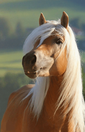 Horse, League, and This: This horse is out of your league