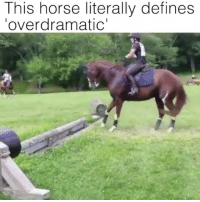 Horse, Octopus, and Girl Memes: This horse literally defines  overdramatic' Everyone thinks I'm overdramatic but when an octopus gets stressed out, it eats itself.... NOW that's overdramatic although I do wish I could eat myself since all the boys I know seem to do it wrong. 😜