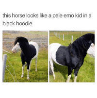 Funny, Meme, and Hoody: this horse looks like a pale emo kid in a  black hoodie 30 year old meme (@dogsbeingbasic )