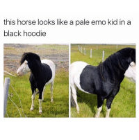 Memes, 🤖, and Bieber: this horse looks like a pale emo kid in a  black hoodie 😂😂😂😂😂 @will_ent - - - - - - - - - - text post textpost textposts relatable comedy humour funny kyliejenner kardashians hiphop follow4follow f4f kanyewest like4like l4l tumblr tumblrtextpost imweak lmao justinbieber relateable lol hoeposts memesdaily oktweet funnymemes hiphop bieber trump