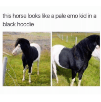 Ketamine, Trendy, and Pony: this horse looks like a pale emo kid in a  black hoodie @friendofbae Bring Me The Hay, Fall Out Pony, My Ketamine Romance, Panic! At The Derby, 21 Jockeys, Pierce the Neigh, Sleeping with Stables, Taking Back Saddles, Prancing in Reverse
