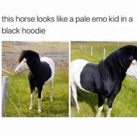 Kardashians, Memes, and Weed: this horse looks like a pale emo kid in a  black hoodie 😂😂😂-Damn😂😂😂😂 -(RP @_theblessedone - - - - - - 420 memesdaily Relatable dank MarchMadness HoodJokes Hilarious Comedy HoodHumor ZeroChill Jokes Funny KanyeWest KimKardashian litasf KylieJenner JustinBieber Squad Crazy Omg Accurate Kardashians Epic bieber Weed TagSomeone hiphop trump rap drake