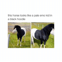 Emo, Horses, and Black: this horse looks like a pale emo kid in  a black hoodie waiting for ph