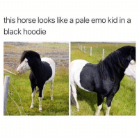 Emo, Friends, and Black: this horse looks like a pale emo kid in a  black hoodie Double Tap This & Tag Friends😂@odviral