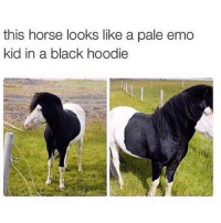 Emo, Horses, and Black: this horse looks like a pale emo  kid in a black hoodie Lmaoo fr fr