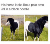 Emo, Black, and Horse: this horse looks like a pale emo  kid in a black hoodie