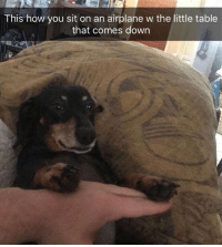 Funny, Airplane, and How: This how you sit on an airplane w the little table  that comes down