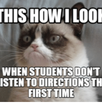 Cat Whining: THIS HOWILOOI  WHEN STUDENTS DONT  ISTENTO DIRECTIONS TH  FIRST TIME