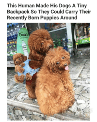 Dogs, Memes, and Puppies: This Human Made His Dogs A Tiny  Backpack So They Could Carry Their  Recently Born Puppies Around  Dasan  Dase If this isn't the best thing I've seen all month. (fb-Tran quoc tien) | Follow @aranjevi for more!