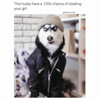 Drake, Kardashians, and Memes: This husky have a 125% chance of stealing  your girl  @hilarious ted 😂😂😂😂lol😩😂 -(RP @hilarious.ted - - - - - - 420 memesdaily Relatable dank MarchMadness HoodJokes Hilarious Comedy HoodHumor ZeroChill Jokes Funny KanyeWest KimKardashian litasf KylieJenner JustinBieber Squad Crazy Omg Accurate Kardashians Epic bieber Weed TagSomeone hiphop trump ovo drake