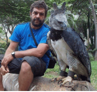 Memes, Eagle, and 🤖: This incredible bird is called a Harpy Eagle. Look how big it is! :O
