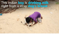 Got milk?   This boy's obsession has him drink milk from dogs breasts and it's creepy AF: This Indian boy is drinking milk  right from a stray d  bre Got milk?   This boy's obsession has him drink milk from dogs breasts and it's creepy AF