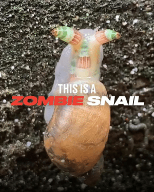 Crazy, Dank, and Nature: THIS IS A  2OMBIE SNAIL A parasite has turned this snail into a 'zombie'. Damn nature, you crazy! 😧