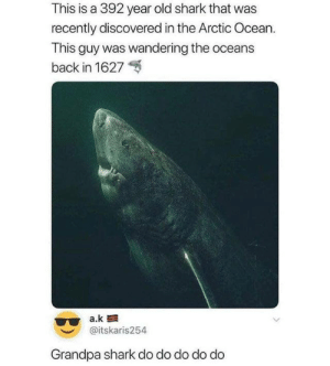 from twitter.com/itskaris254: This is a 392 year old shark that was  recently discovered in the Arctic Ocean.  This guy was wandering the oceans  back in 1627  a.k  @itskaris254  Grandpa shark do do do do do from twitter.com/itskaris254