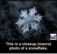 closeup: This is a closeup (macro)  photo of a snowflake.