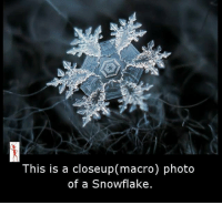 closeup: This is a closeup(macro) photo  of a Snowflake.