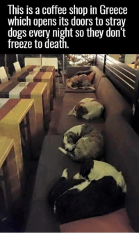 Dogs, Memes, and Coffee: This is a coffee shop in Greece  which opens its doors to stray  dogs every night so they don't  freeze to deat This is great