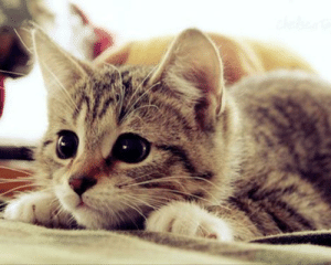 This is a cute cat: This is a cute cat