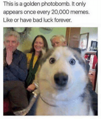 Bad, Dank, and Family: This is a golden photobomb. It only  appears once every 20,000 memes.  Like or have bad luck forever. Doggy ruined it for the family:P