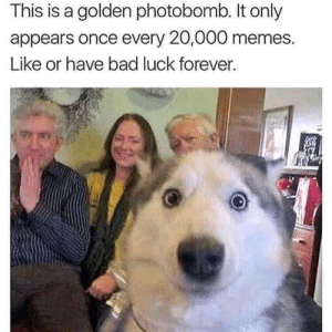 1 in 20,000 people may find this funny: This is a golden photobomb. It only  appears once every 20,000 memes.  Like or have bad luck forever. 1 in 20,000 people may find this funny