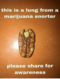 Amiri King has some real diverse humor.: this is a lung from a  marijuana snorter  please share for  awareness Amiri King has some real diverse humor.
