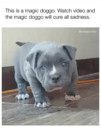 Funny, Memes, and Best: This is a magic doggo. Watch video and  the magic doggo will cure all sadness.  @instaalcoholic @instaalcoholic has the best memes
