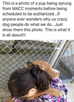 Crazy Dog: This is a photo of a pup being sprung  from MACC moments before being  scheduled to be euthanized...If  anyone ever wonders why us crazy  dog people do what we do...Just  show them this photo. This is what it  is all about!!!