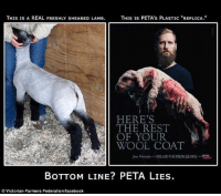 "Anaconda, Animals, and Confused: THIS IS A REAL FRESHLY SHEARED LAMB.  THIS IS PETA's PLASTIC ""REPLICA.""  HERE'S  I THE REST  OF YOUR  WOOL COAT  rse liini--