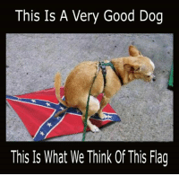 This is a very good dog who clearly knows where to do its business...: This Is A Very Good Dog  This Is What We Think Of This Flag This is a very good dog who clearly knows where to do its business...