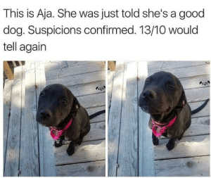 Aja's smile can stop wars, you can't change my mind.: This is Aja. She was just told she's a good  dog. Suspicions confirmed. 13/10 would  tell again Aja's smile can stop wars, you can't change my mind.