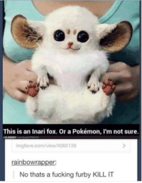Slenderman: This is an Inari fox. Or a Pokémon, I'm not sure.  LOLDRARY com/post 55974/  imgfave.com/view/4065136  rainbow rapper:  No thats a fucking furby KILL IT Slenderman