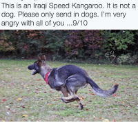 "Dogs, Target, and Tumblr: This is an Iraqi Speed Kangaroo. It is not a  dog. Please only send in dogs. I'm very  angry with all of you...9/10 <p><a href=""http://animalrates.tumblr.com/post/146422618125/animal-rates"" class=""tumblr_blog"" target=""_blank"">animalrates</a>:</p>  <blockquote><p><a href=""http://animalrates.tumblr.com/"" target=""_blank""><b>animal rates?</b></a></p></blockquote>"